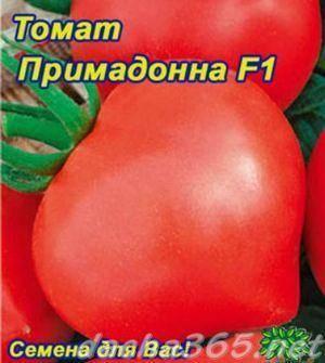 Выращивание томата примадонна