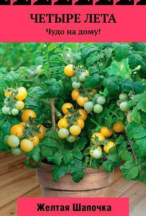 Характеристика томата кистевой f1 и выращивание гибридного сорта