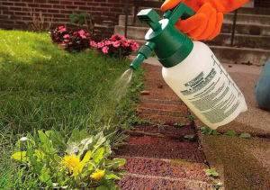 Как действуют гербициды на сорняки?