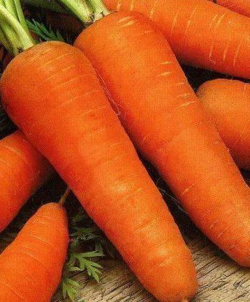 Описание сорта моркови шантанэ: от агротехники выращивания до сбора урожая