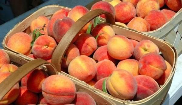 Рецепты приготовления компотов из персиков без стерилизации на зиму