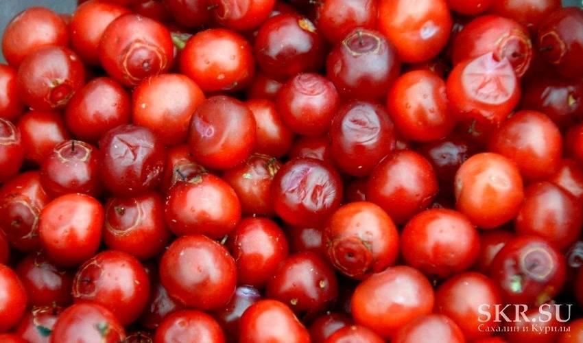 Когда созревает земляника: расчет времени и примерные сроки созревания. полезная информация по сбору и выращиванию ягод (85 фото и видео)