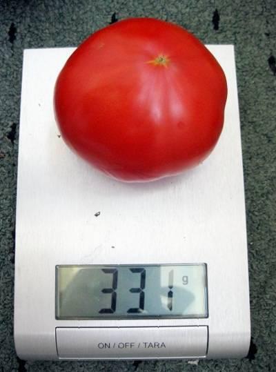 Описание сорта томата эффект, его характеристика и урожайность