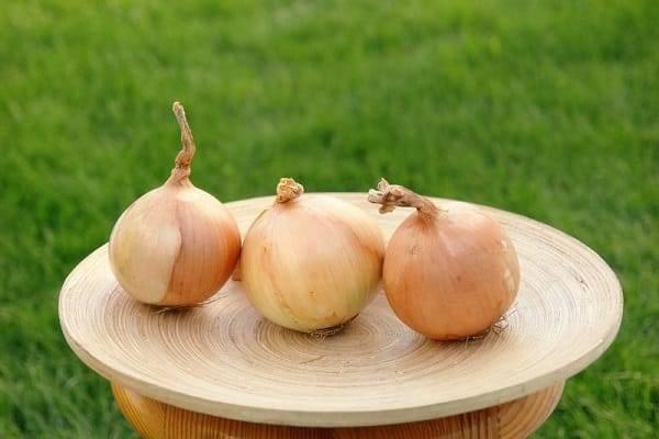 Описание, выращивание и уход за гибридным репчатым сортом лука Кэнди