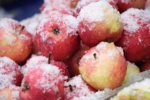 Можно ли заморозить кизил на зиму и как сохранить? как хранить кизил в замороженном виде зимой