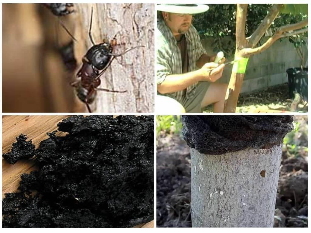 Причины появления дупла на молодой и старой яблоне, как заделать и чем замазать