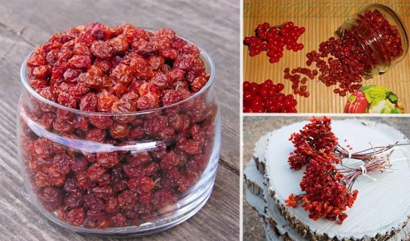 Калина на зиму - 5 простых рецептов приготовления с фото пошагово