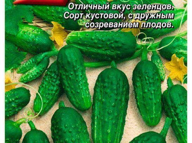 Описание сорта Мексиканского огурца, особенности выращивания и урожайность