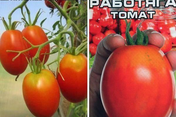 Томат удачный: характеристика и описание сорта с фото