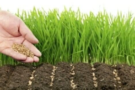 Что лучше посадить после уборки лука