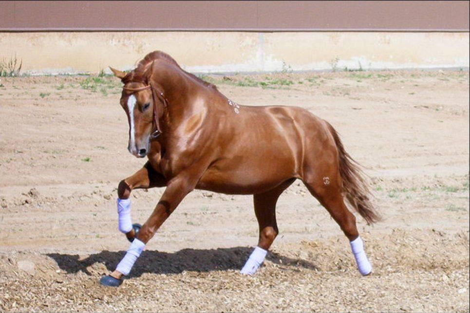 10 самых красивых пород лошадей