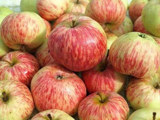 Характеристики сорта яблонь россошанское полосатое, описание подвидов и урожайности