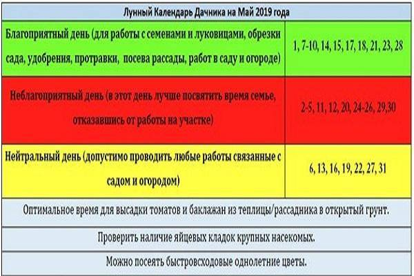 Особенности посадки огурцов в июне 2020 года по фазам луны и выбор сорта