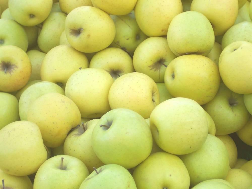Виды и сорта яблонь