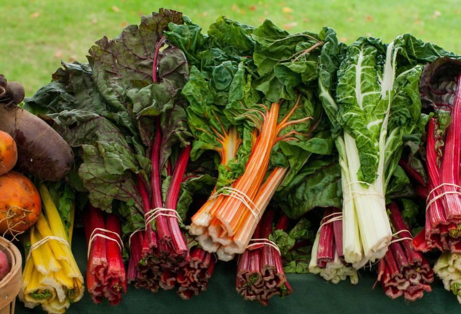 Листовая свекла мангольд: выращивание и хранение морозостойкого сорта