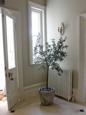 Оливковое дерево — секреты «священной» культуры