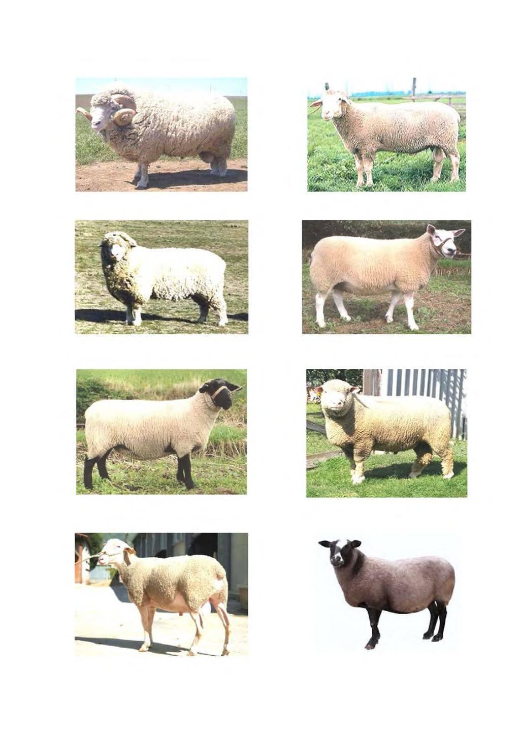 Об утверждении порядка и условий проведения бонитировки племенных овец романовской породы