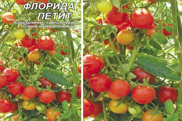 Томат щелковский ранний отзывы фото урожайность