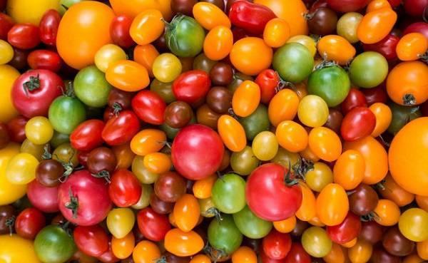 Сорт томата «сливка розовая»: описание, характеристика, посев на рассаду, подкормка, урожайность, фото, видео и самые распространенные болезни томатов
