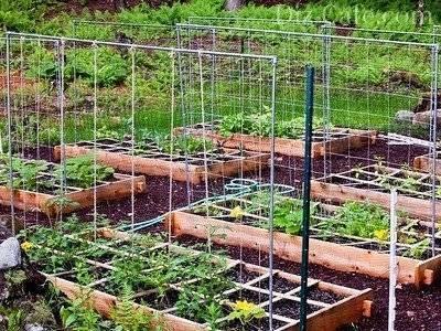 Правила установки сетки для огурцов в теплице и открытом грунте
