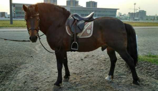 Сколько в среднем может весить лошадь и как определить массу, мировые рекорды