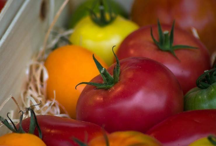 Сладкие и целебные томаты «утенок»: описание сорта, характеристики плодов, рекомендации по выращиванию