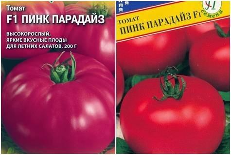 Выращивание томата пинк парадайз
