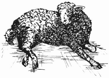 Возбудитель и причины чесотки у свиней, симптомы и методы лечения