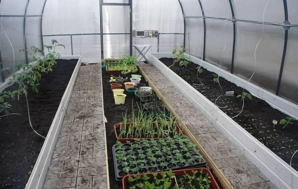 Как правильно подготовить и удобрить почву для выращивания томатов в теплице?