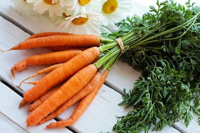 Как собрать семена моркови самостоятельно