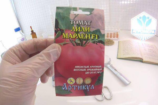 Сорт томата «верлиока»: описание сорта и его выращивание