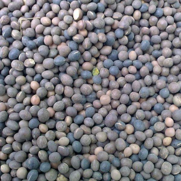 Описание растения вика посевная яровая, как используют и особенности посадки. вика - растение из семейства бобовых