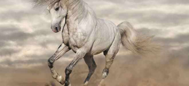 От чего зависит скорость лошади?