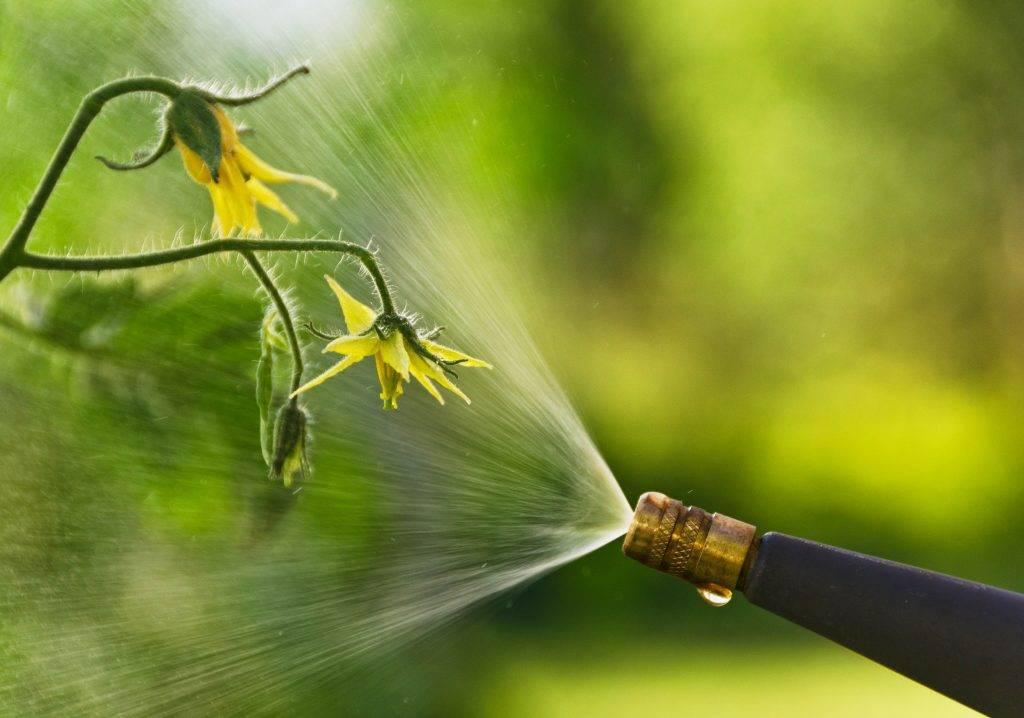 Перекись водорода для огурцов – 8 особенностей и 9 советов по использованию