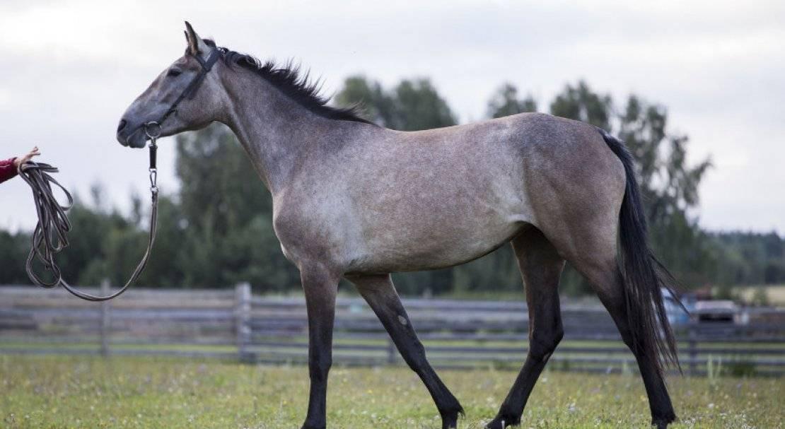 Требования к разведению лошадей