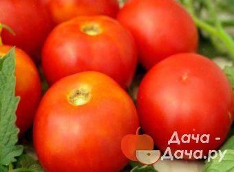 Отличный сорт томата для выращивания в теплицах — «сосулька розовая»