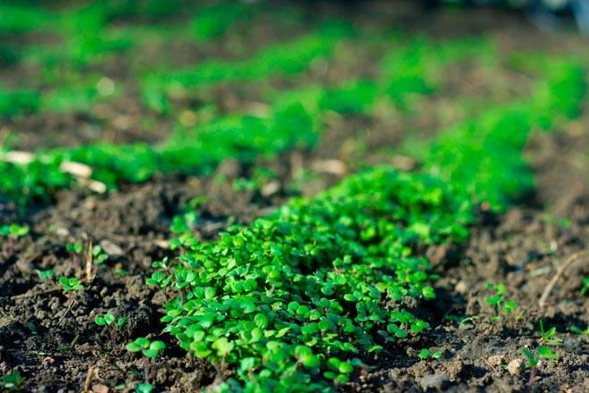 Как уничтожить сорняки на огороде народными способами?