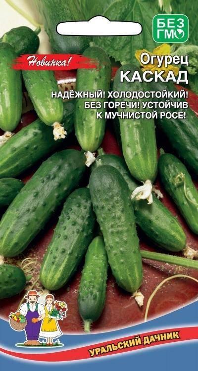 Описание сорта огурца Вязниковский, рекомендации по уходу и выращиванию