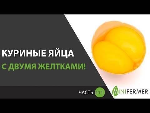 Основные причины носки курами яиц без скорлупы и пути исправления этого дефекта