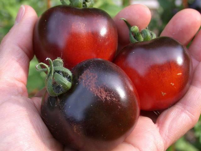 Сорт томата черри: описание, фото, чем полезны и какая калорийность у маленьких помидор?