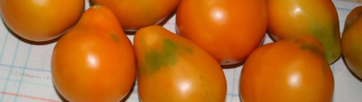Томат сан-марцано: описание сорта, его выращивание и урожайность с фото