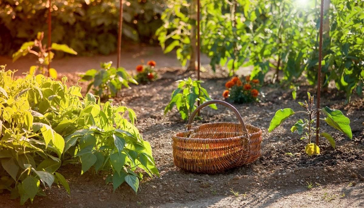 Советы огородникам: с чем рядом можно посадить базилик на грядке, а какие растения с ним не сочетаются?