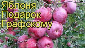 Поздние сорта яблонь для россии, украины и белоруссии