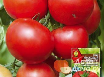 Крупноплодные сорта томатов для открытого грунта