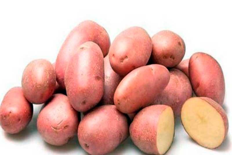 Сорт картофеля хозяюшка фото и описание отзывы