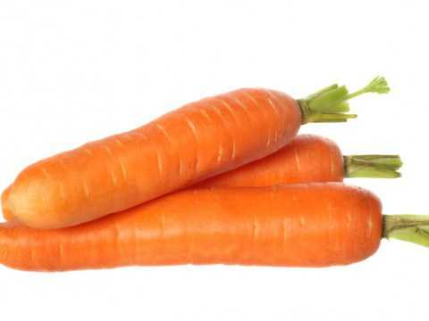 Обзор ранних скороспелых сортов моркови: курода, шантане, кордоба и другие