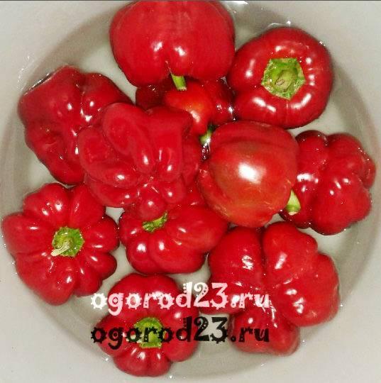 Описание сортов перцев ратунда, рубиновый, колобок, оленька (гогошары)