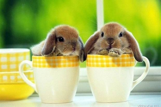 Декоративные кролики в домашних условиях — что нужно знать?