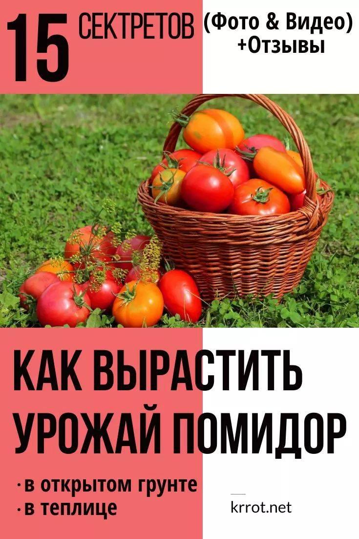 Посадка свеклы семенами в открытый грунт весной: сроки и правила посева
