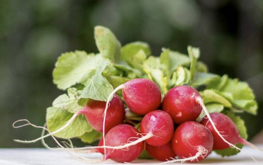 Знакомство с арбузной редькой. характерные особенности и практические рекомендации по выращиванию сорта